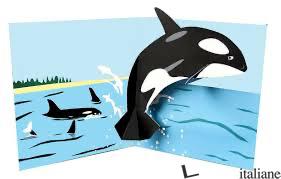 Killer Whale Pop-Up TTT1503 - SHERI SAFRAN
