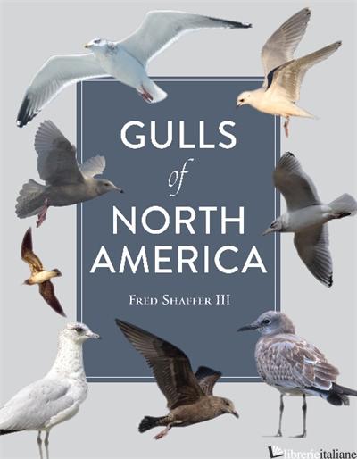 Gulls of North America - SHAFFER F.