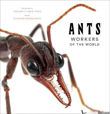 Ants: Workers of the World - Eleanor Spicer Rice, by (photographer) Eduard Florin Niga